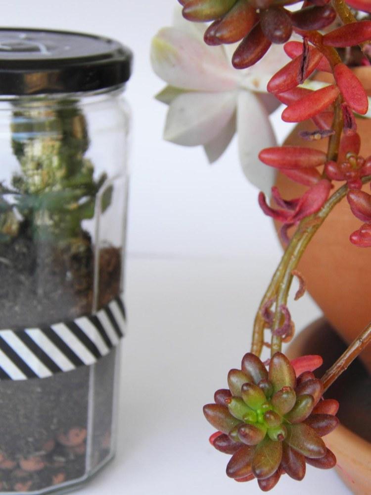 diy-terrarium-cactus-cadeau-fete-des-peres